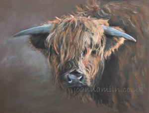 """Highland Bull Open Giclée Print 19.5""""x17"""" £55"""