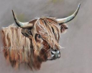 """Highland Cow Open Giclée Print 19.5""""x17"""" £55"""