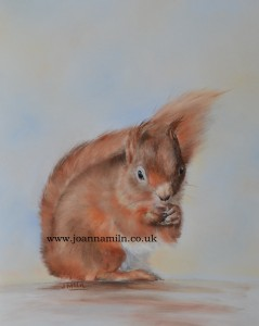 """'Rusty' Red Squirrel Open Giclée Print 12"""" x 10"""" with mount"""
