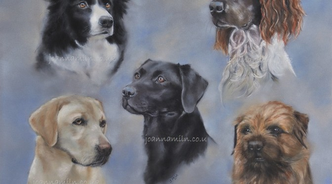 Pet Portraits by Joanna Miln