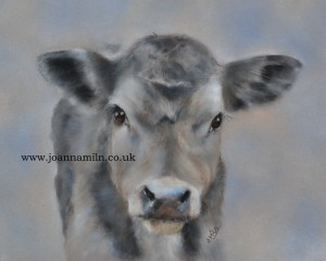 "'Blue' Day old calf Open Giclée Print 12""x10"" with mount"
