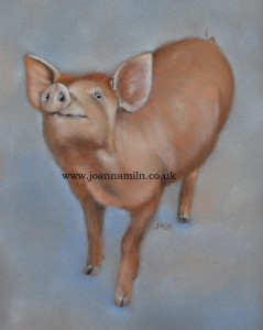 "'Happy Pig' Open Giclée Print 12"" x 10"" with mount"