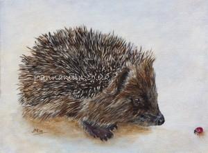"""Hedgehog Open Giclée Print 14""""x11"""" £35"""