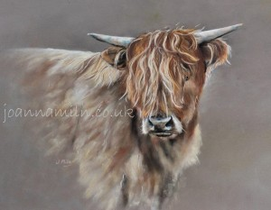 """Highland Calf Open Giclée Print 19.5""""x17"""" £55"""