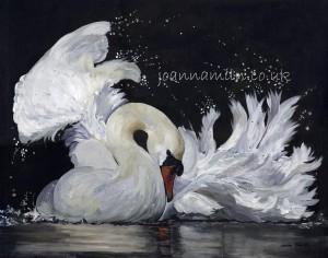 "Washing Swan Limited Giclée Print 17""x19.5"" £55"